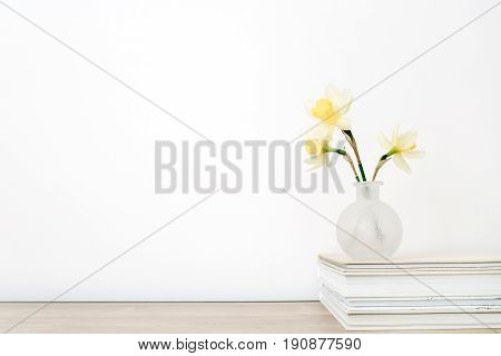 Beautiful pale yellow narcissus flower in flowerpot on table in front of white background. Floral composition