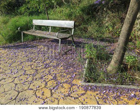 Bench And Jacaranda Blossoms
