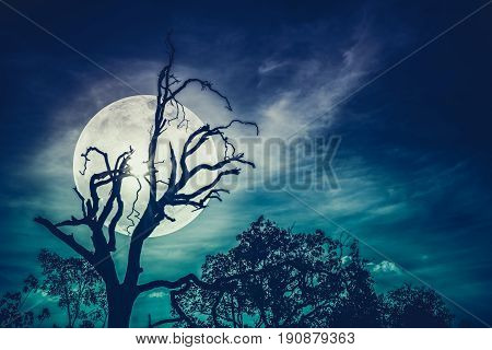 Night landscape of sky with bright super moon behind silhouette of dead tree serenity nature. Outdoors at nighttime. Cross process. The moon taken with my own camera.