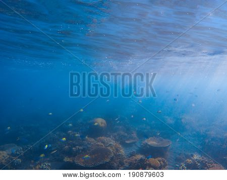 Underwater landscape with coral reef. Corals with tropical fishes colony. Blue sea and tropical seabottom photo. Sea animals and plants. Exotic seashore. Marine inhabitants. Sea water ecosystem