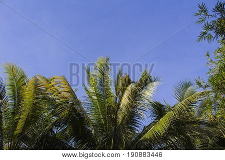 Palm tree leaves on sunny blue sky background. Tropical tree crown on blue sky. Palm crowns on blue sky. Palm leaf border. Tropical vacation banner template with text place. Tropical paradise postcard