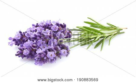 Lavender with leaves in closeup