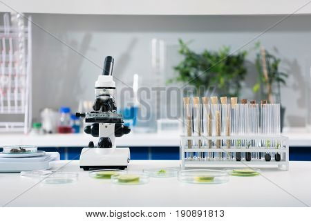 Scientific tools and plants at workplace in modern biological laboratory