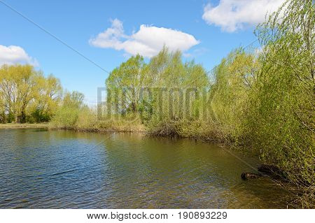 Spring landscape with a pond trees and a blue sky with clouds