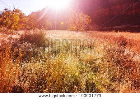 Autumn scene in Zion