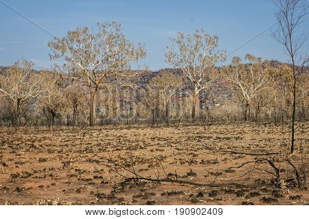 Savanna after Bushfire at the Outback - Western Australia
