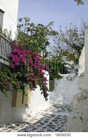 Flowers Greece1