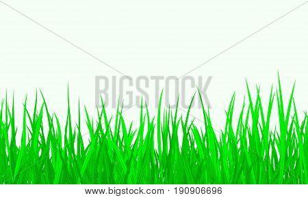 Green Grass Border Seamless background, Vector Illustration EPS10