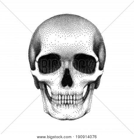 Stippled human skull with a lower jaw. Vector textured illustration on white background..