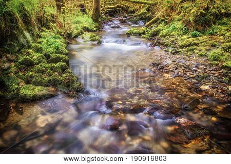 A Magical Looking Stream In A Woods