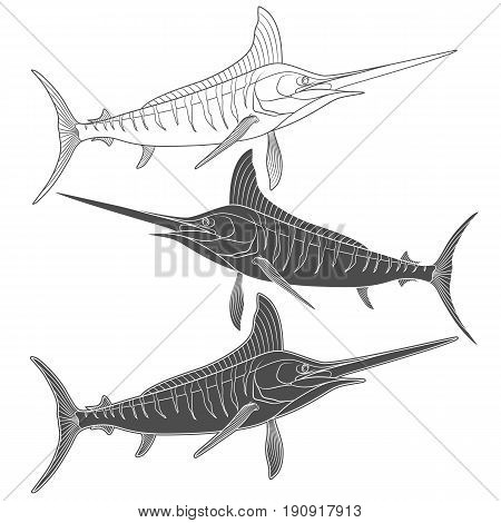 Set of black and white images with marlin fish. Isolated vector objects on white background.