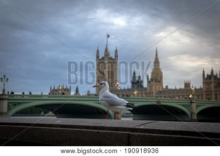 seagull on river thames in london at dusk