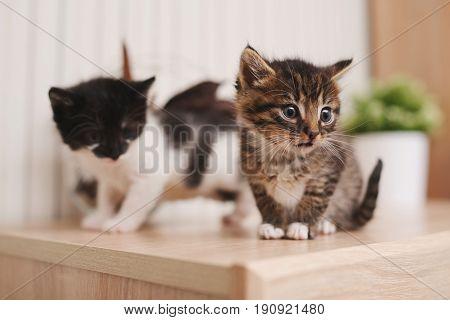 two beautiful little kitties on bright background