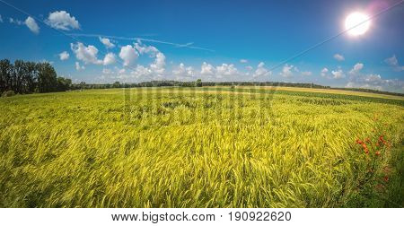 Agriculture Field With Shining Sun And Blue Sky In Summer
