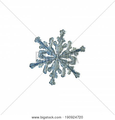 Snowflake isolated on white background. Macro photo of real snow crystal: stellar dendrite with tiny hexagonal center and six elegant arms. Snowflake photo was taken in cold gray - blue light.