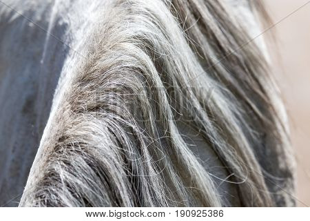 background of the horse's mane . A photo