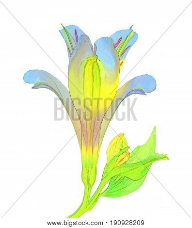 Isolate watercolor picture of alstroemeria. Vivid illustration with realistic flower and leaves. Exotic graphic background Wallpaper. Fabulous stylised decorative background.