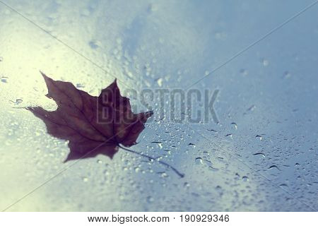 maple leaf stuck to a window covered with raindrops / wet autumn weather