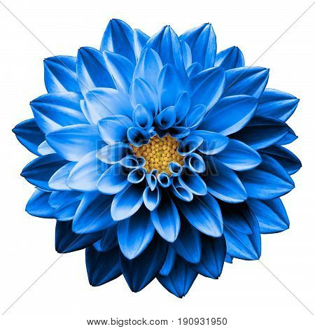 Surreal Dark Chrome Blue Flower Dahlia Macro Isolated On White