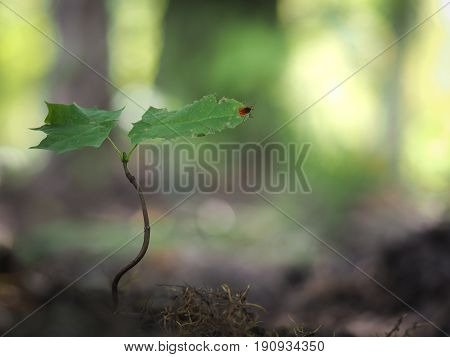 Tick encephalitis in a young plant in the forest
