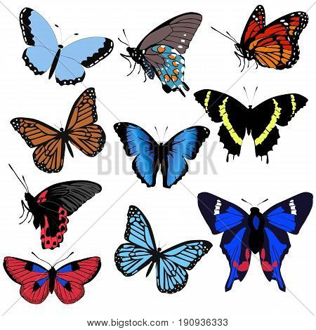 set beautiful butterfly on white background. collection of stickers of badges and labels with butterflies. pattern to decorate or design greetings or scrapbook. vector illustration