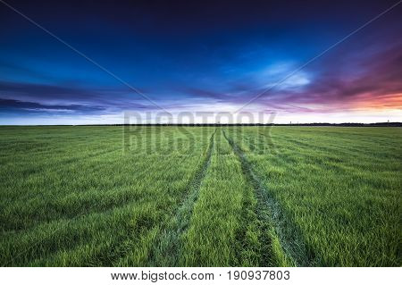 Landscape Of Rural Country Road Through Green Wheat Field At Late Spring Or Early Summer Season. Green Meadow And Pathway, Way, Open Road At Sunset Or Sunrise Dawn. Agricultural Rural Landscape.