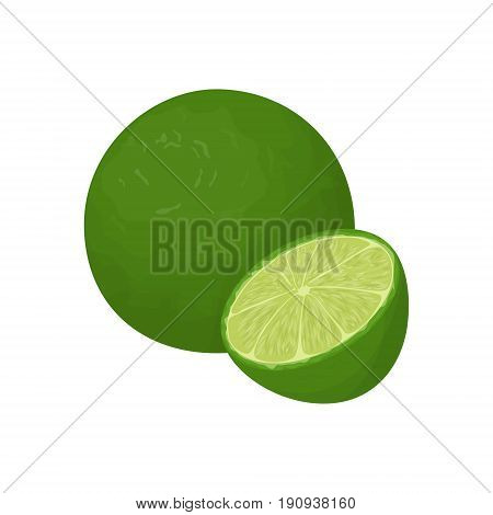Isolated lime fruit onwhite background. Sour and healthy fruit.