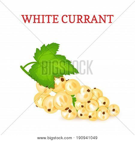 White currant. White berries Branch and green leaves. Ripe white currant berries. Vector card illustration for design tea, ice cream, natural cosmetics, candy, health care products, detox diet
