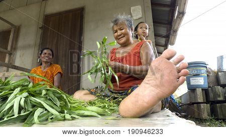 Chang Mai, Thailand - May 28, 2011: Two women sorting out plants in Chang Mai.