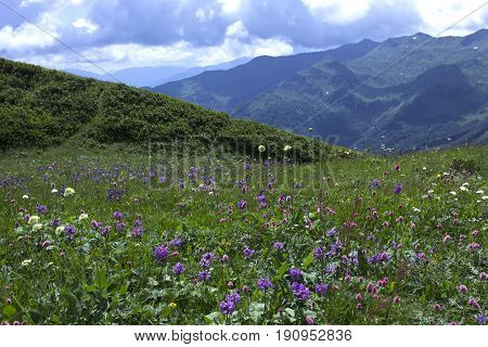 Beautiful mountain landscape with alpine meadows. Green grass and blue sky.