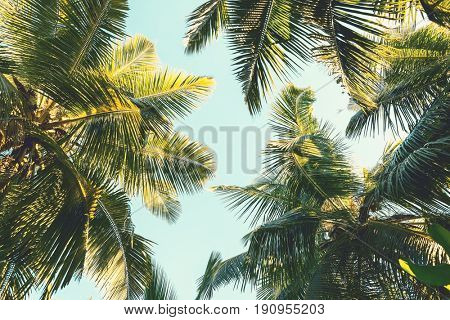 Coconut palm tree on sky background.   Low Angle View. Toned image