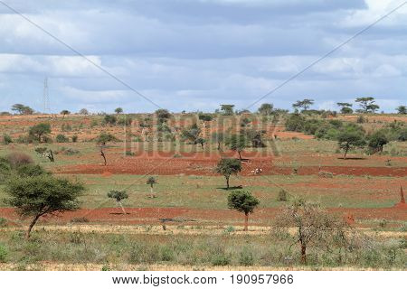The Landscape and Fields and meadows in Ethiopia