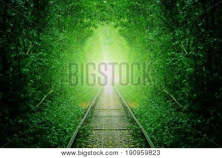 a railway in the summer forest