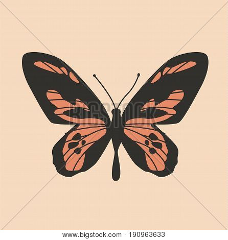 Colorful butterfly. Butterfly design. Cute butterfly Vector stock.