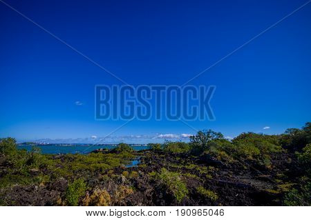 Beautiful landscape in volcanic Rangitoto island in Auckland, in a sunny day with a beautiful blue sky.