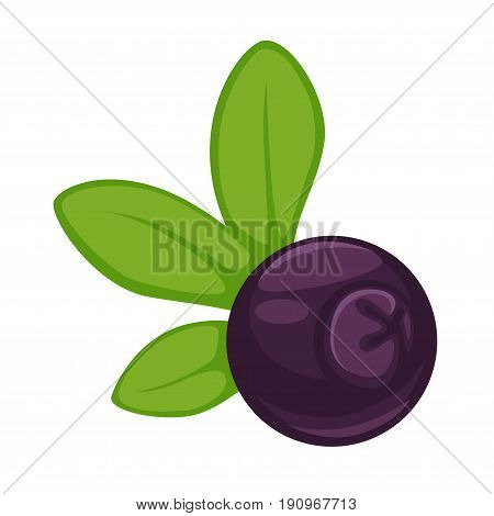 Blueberry small round fruit of dark purple color with long green leaves isolated vector illustration on white background. Delicious natural wild or domestic bilberry useful for humans eyesight health.