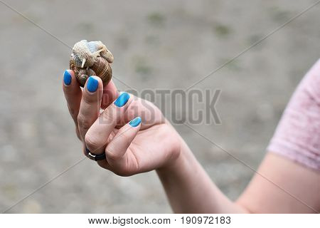 Woman hand with blue manicure holding a snail