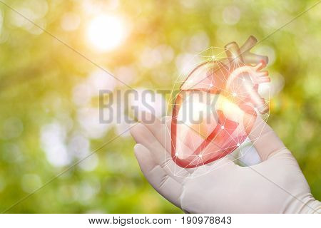 Heart In The Hand Of The Surgeon .