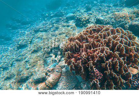 Undersea landscape with coral reef. Diverse coral shapes. Saltwater wildlife. Tropical seashore animals in wild nature. Exotic island vacation. Sea bottom with young coral ecosystem. Tropic snorkeling