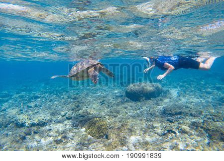 Woman snorkeling with sea turtle. Turtle and snorkel underwater. Snorkeling in tropical seashore. Shallow water animal. Cute turtle underwater. Tropical island vacation. Marine tortoise swim undersea