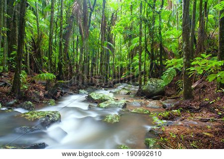 Tamborine Mountain rainforest on the Gold Coast in Queensland, Australia