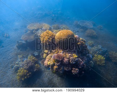 Deep blue sea landscape with coral reef under sunlight. Round coral formation with seaweed. Underwater photo of tropical seabottom. Sea animals and plants. Exotic seashore. Tropic marine ecosystem