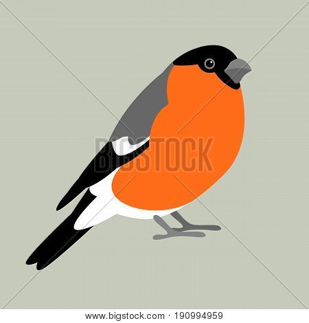 bullfinch bird vector illustration style Flat profile