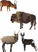 horned animals collection isolated on white background poster
