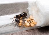 Super macro image of the worker ant (Camponotus Sp.) feeding the queen ant in test tube while another ant feeding the larva poster