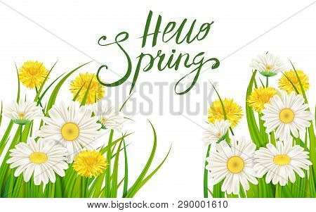 Hello Spring Banner. Hand Drawn Lettering. Background With Chamomile, Daisy. Spring Time Template, F