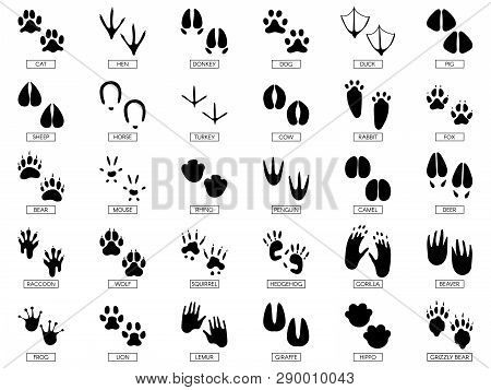 Animals Footprints. Animal Feet Silhouette, Frog Footprint And Pets Foots Silhouettes Prints Vector