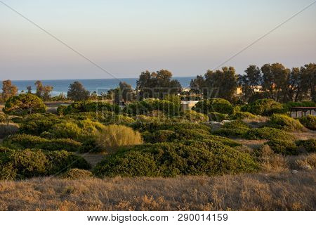 Coast Line With Lighthouse, Dune And Rare Vegetation In The Background At Sunset
