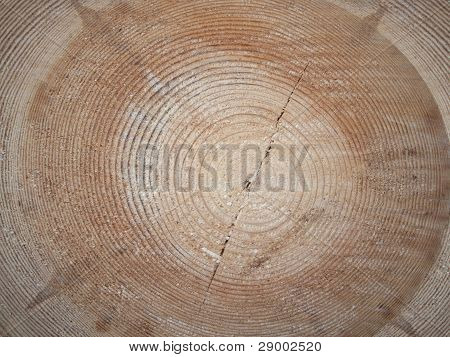 Cross-section Saw Cut Of A Log Of A Pine.