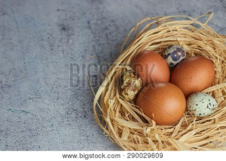 Brown Chicken Eggs With Quail Eggs In Hay Nest On Concrete. Closeup Of A Farm Of Eggs. Horizontal Vi
